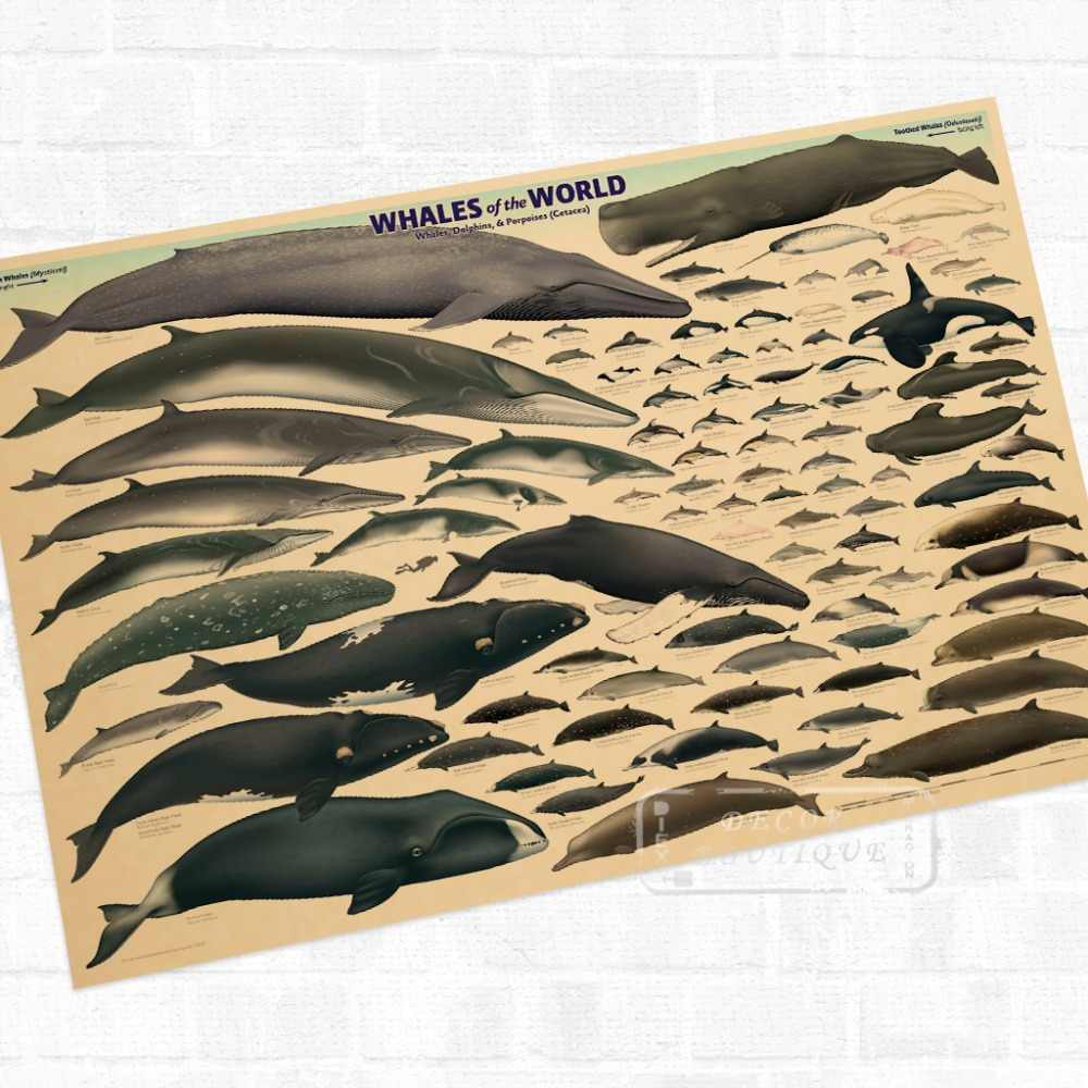 A Baleia Mundo Organismo Marinho Vintage Retro Kraft Cartaz Revestido Decorativo DIY Etiqueta Da Parede Da Lona Art Home Decor Presente
