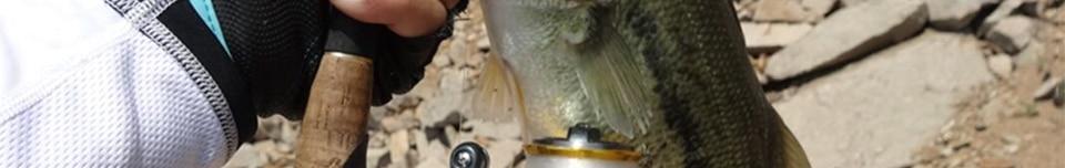 Visgerei met Pesca TSURINOYA 116