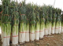 100 PCS/BAG green onion seeds Organic heirloom seeds vegetables Kitchen cooking food easy to grow home garden plant