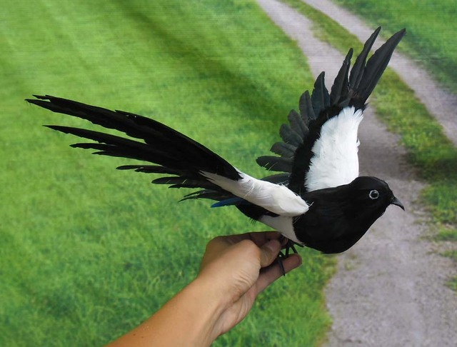 about 30x50cm spreading wings magpie bird model toy  plastic foam  u0026 feathers magpie  prop home