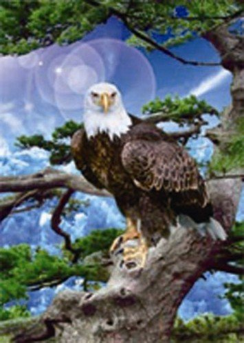 Free shipping Best quality 3D photo of handsome eagle ,PET material,24.5*34cm+quality warranty