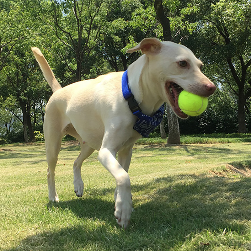 Professional Tennis Balls 3PCS Durable High Resilience Rubber Practice For Club Exercises Tennis Training Pet Play Standard Size