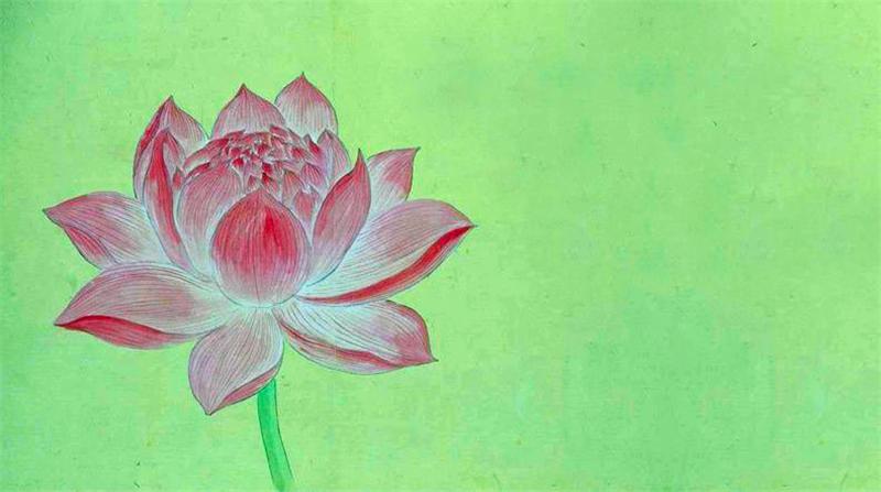 ,Lotus