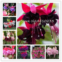 100 Pcs/Bag Multiple Color Fuchsia Bonsai, Hybrida Hort Flores,Bonsai Lantern Flowers, For Garden Home Indoor Blooming Plants(China)