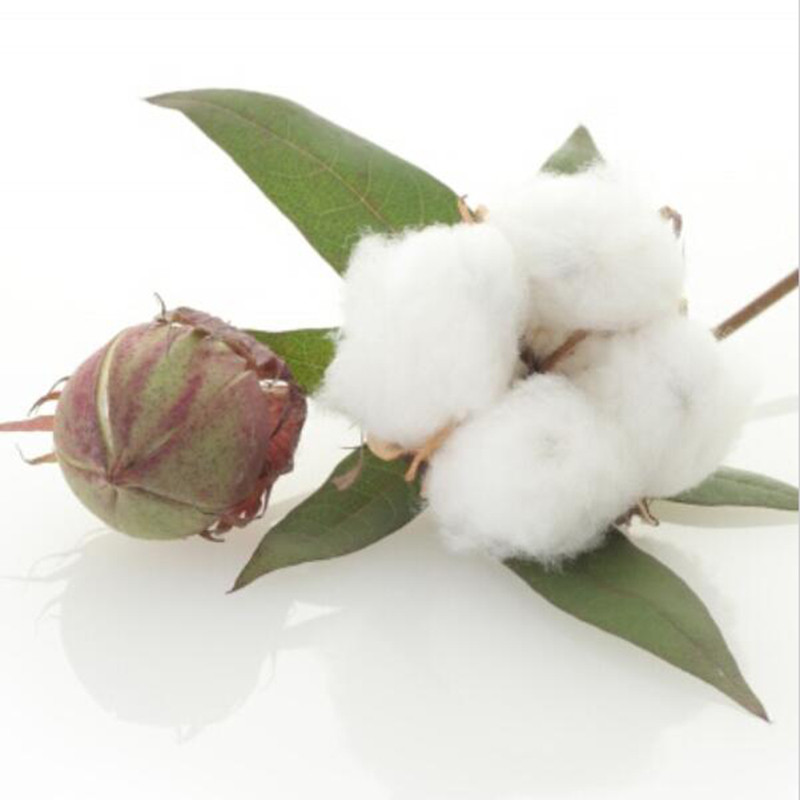 free online personals in cotton plant Let overstockcom help you discover designer brands and home goods at the lowest prices online  free shipping just spend $45 and the shipping is on us it's that easy to get new items delivered to you get paid to shop.