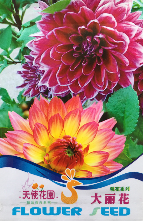 30pcs/bag Dinner Plate rainbow Dahlia seeds, Chinese Peony bonsai flower seeds for home garden plantting free shipping