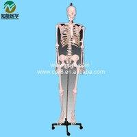 BIX A1001 Human Skeleton Model W033