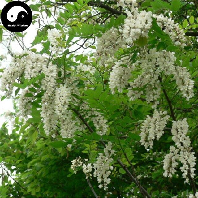 Acquistare falso albero di acacia semente 100 pz pianta for Acacia albero