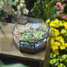 Modern Artistic Clear Glass Geometric Terrarium Eight-sides Succulent Fern Moss Box Plant Terrarium Bonsai Flower Pot