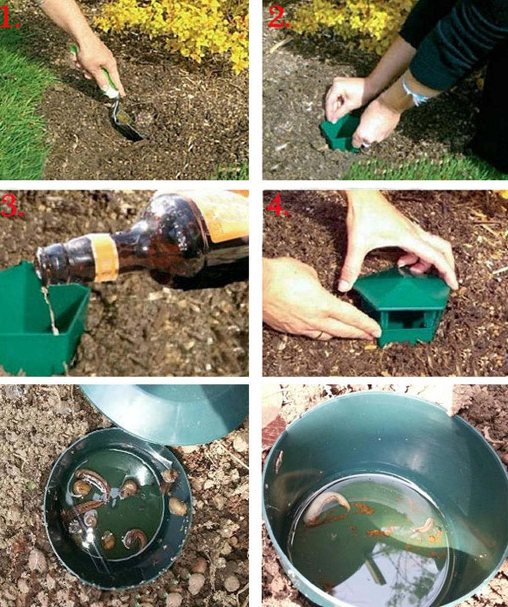 аквариумная улитка; аквариум ловушки, улитки ; садовая улитка;