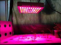 300w 600w LED Grow Lights Bulb Plant Lighting for Plant Led Grow Lamp for Hydroponics Green House grow box