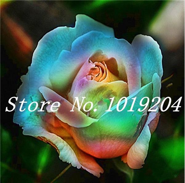 online get cheap nice flower aliexpress  alibaba group, Beautiful flower