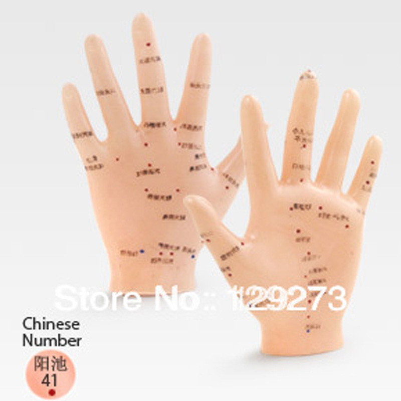 Free Shipping English Medical Acupuncture Model Hand ...