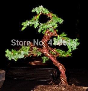 craft aluminium wire bonsai training tools for hanging bonsai rh aliexpress com Bonsai Styles Bonsai Shapes