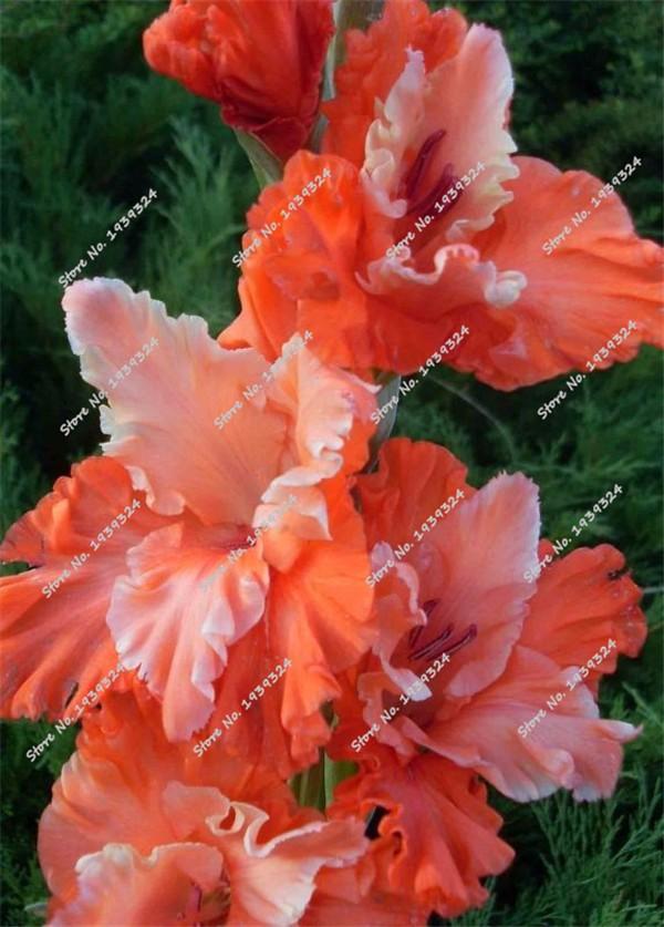 The Yard Flower