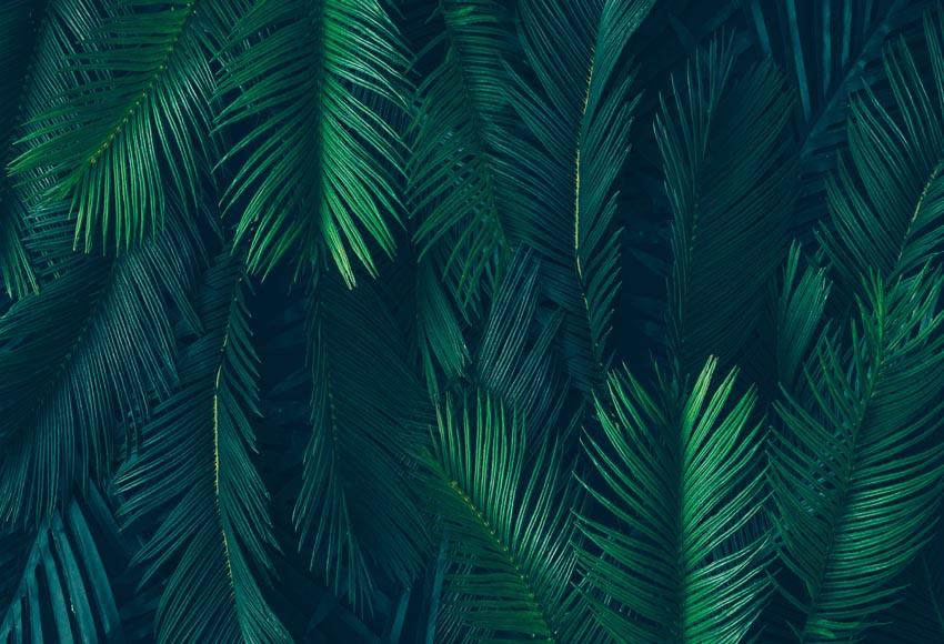 7x5ft Tropical Dark Green Leaves Palm Tree Custom Photo