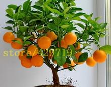 20 pcs bonsai orange seeds NO GMO mini bonsai tree Balcony Patio Potted Fruit Trees Kumquat