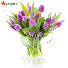 Bonsai Flower Purple Tulip Seeds Potted Indoor and Outdoor Flowering Plants 100 Particles / lot