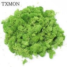 1000g 고품질 시뮬레이션 녹색 식물 불멸의 가짜 꽃 이끼 잔디 거실 장식 벽 diy의 꽃 장식
