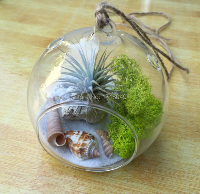 Great Pcsset Hanging Planter Plantmoss Succulent Terrarium For Garden Decor  With Decorative Indoor Hanging Planters