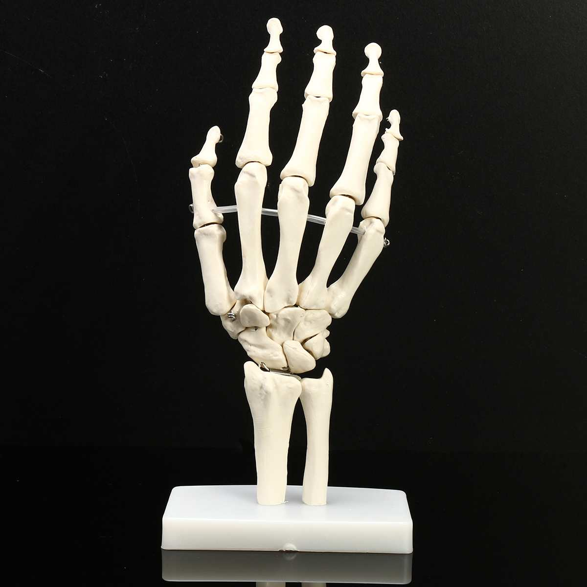 1:1 Life Size Human Hand Joint Model Hand Skeleton Bone Model Wrist Vola Palms Skeleton Model Medical Science Teaching Supplies