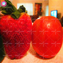 600pcs/bag Giant Strawberry Seeds Sweet and Delicious Fruit Farming Plants for Home Garden Best packaging 100% Germination rate