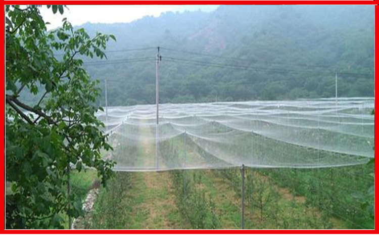 10m White Anti-bird Net Gardening Net Grape Orchard Protection Net Loach Fishpond  Skynet Culture Net Customize Your Size