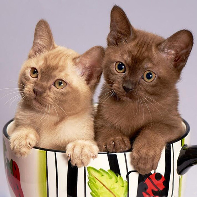 DIY Diamond Painting Novelty Cat Animals In The Mug Crystal Rhinestones Embroidery Cross Stitch Home Decor Needle Arts & Craft
