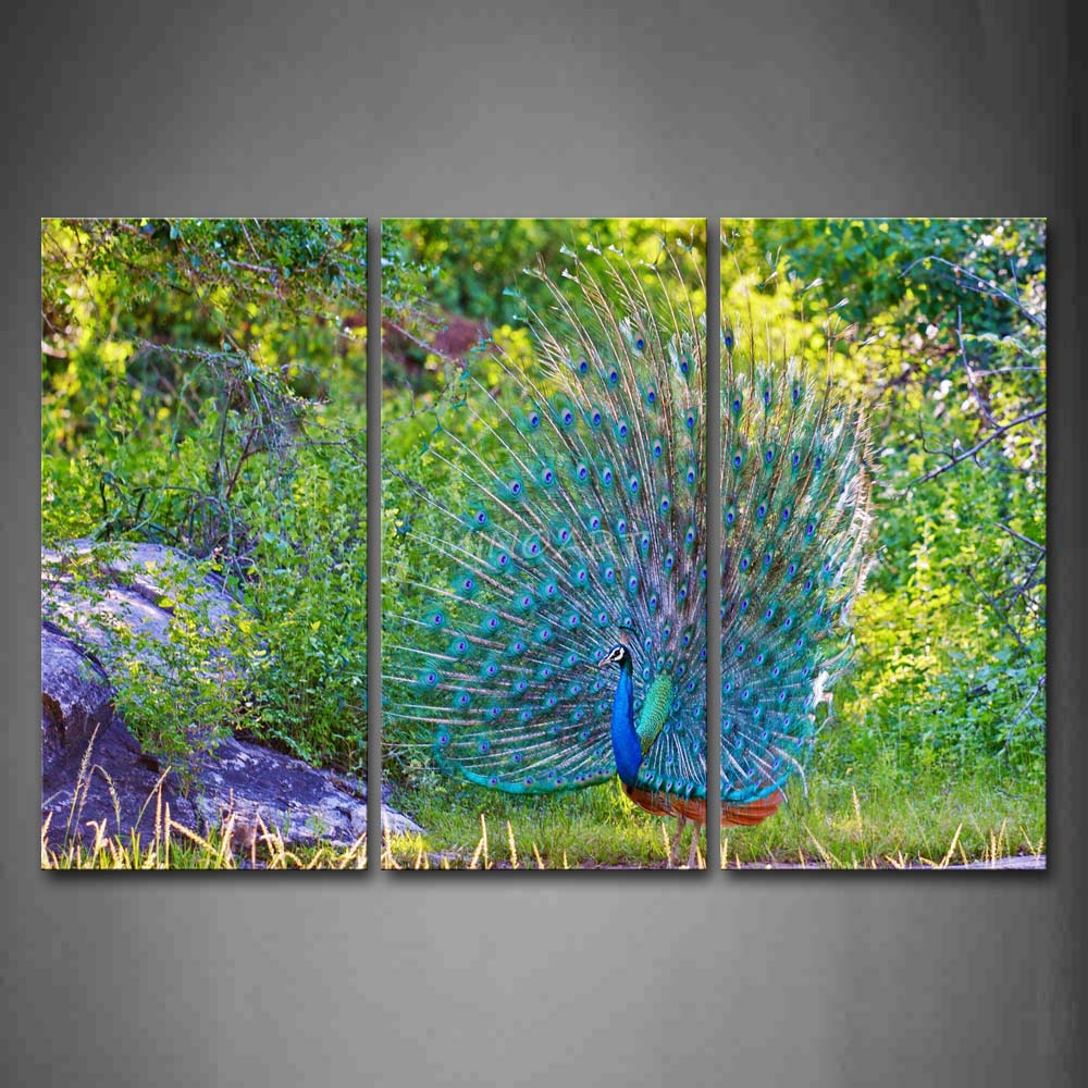 Plant Wall Art 3 piece wall art painting peacock stand on land plant beautiful