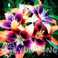 Planta de maceta bonsái de lirio real Flor de lirio, planta de bonsái tenue para jardín doméstico-50 piezas