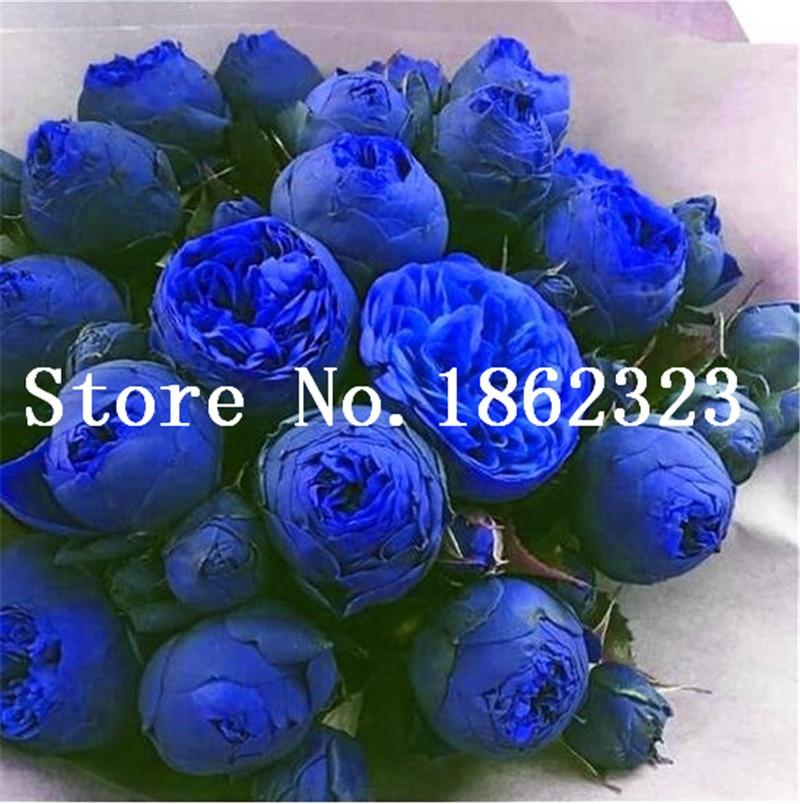 10 Pcs/bag Blue Bonsai Peony Flower, Perennial Peony Flowers Home Garden Plant Flower Bonsai Chinese Paeonia Suffruticosa