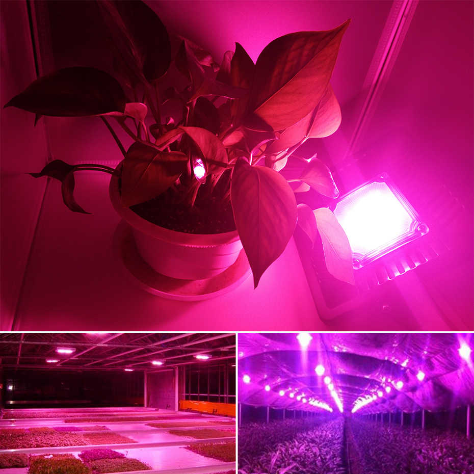 LED mazorca de luz de espectro completo 380-840nm fitolampy 50 W 100 W IP66 impermeable led planta Reflector para las plantas acuario hidropónica