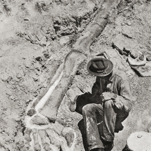 First Discovery Of The Long Hind Leg Of The Dinosaur Diplodocus By Henry Fairfield Osborn In 1898 At Bone Cabin Quarry 2