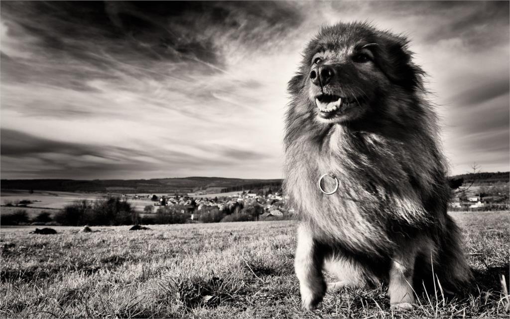 ₩Animales liondog hierba negro blanco cielo Sala hogar pared arte ...