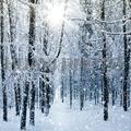 8x10 футов (2 5x3 м) художественный тканевый фон для фотосъемки с изображением снежного леса D-8708