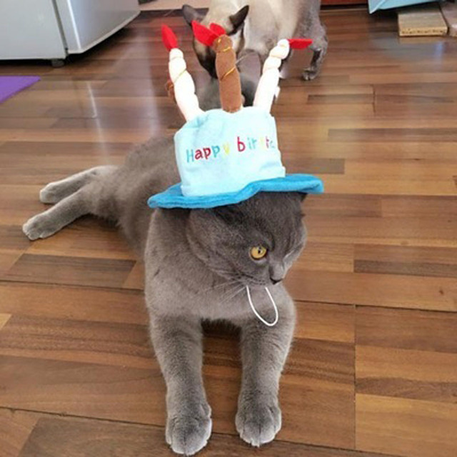 New Pet Cat Dog Costume Cap Birthday Cake Candles Design Party Accessory Headwear For Dogs Cats