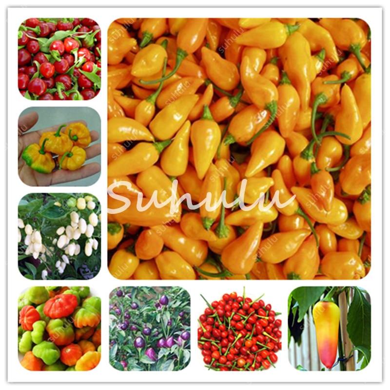 100Pcs Mini Cherry Chili Seedsplants Carolina Reaper Organic Bonsai Vegetable Rainbow Bell Ghost Pepper Home Garden Easy To Grow