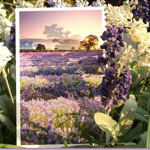 30pcs/lot Romantic Provence Gorgeous Landscape Flowers of French city Lavender greeting Postcard/Christmas gift/set 30pcs in one postcard take a walk on the go dubai arab emirates christmas postcards greeting birthday message cards 10 2x14 2cm