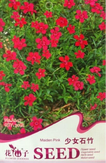 Free Shipping Girls Pink Flower Seeds Flower Seeds Luoyang Shek Kuk