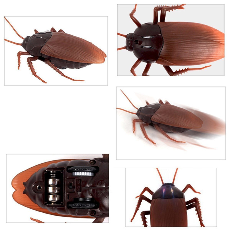 Gags e Câmera Escondida engraçado simulação barata formiga aranha Tema : Animais