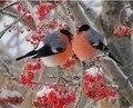 2016 Diy 5D Красная Птица картина Рукоделие вышивки крестом алмазов мозаика подарок home decor алмаз Живопись Полный алмазов вышивки