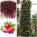 Escalada vermelho Morango Sementes, jardim de Fruta Planta, doce E Delicioso de plantas ao ar livre 100 pcs AA