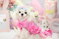 Pink Blue Purple 5DLP52 Princess Style Flowers Dog Clothes Dog Harness Leash Puppy Walking Harness Lead