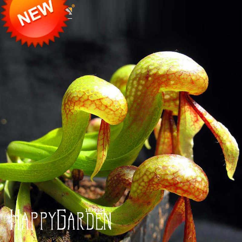 Новое поступление! 50 шт./партия, как змеиная Nepenthes Сад бонсай для балкона в горшке растения Флорес Плотоядные растения plantas, #9NZ160