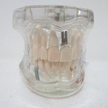 Стоматологические материалы съемные стоматологические патологические модели специальные украшения клиника украшения на заказ фигурки