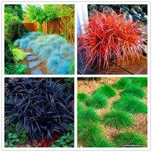 100 шт./пакет овсяница Семена-(овсяница glauca) многолетнее Hardy декоративные травы Семена горшка цветок для дома сад