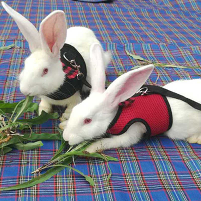 Nova Coelho Preto Chumbo Leash Vest Malha de Pequenos Animais Algodão Arreios Coleiras Gato Hamster Vermelho S M L Trela Arnês pet Cinta 27