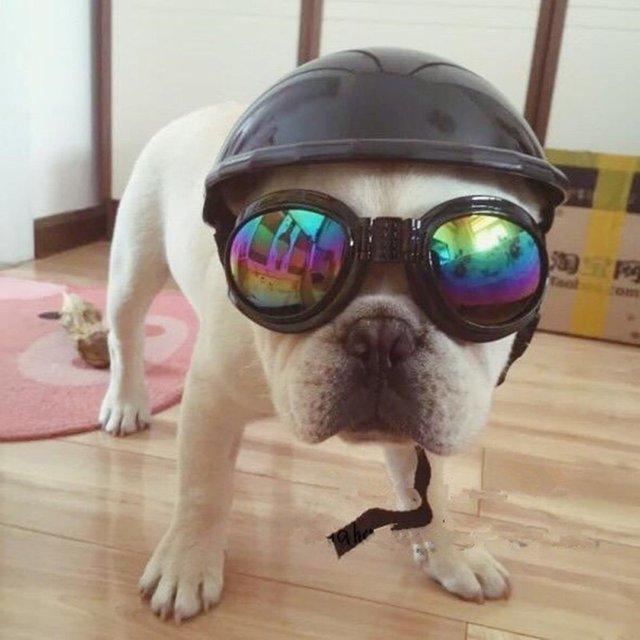 c5ca729ad0 Perro lindo Sombrero Casco + impermeable a prueba de Viento gafas de Sol de  Aviador Para