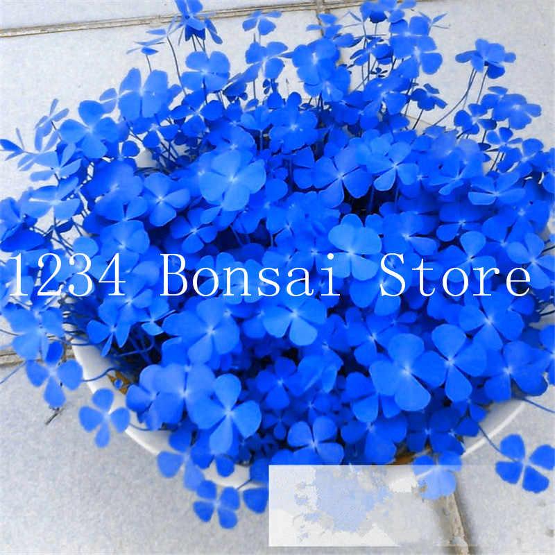 จัดส่งฟรี 100 Pcs Clover ดอกไม้ Bonsai Tree พืชบ้านสวนสี่ Leaf Lover หญ้าโต๊ะ Beautifying พืชบาน