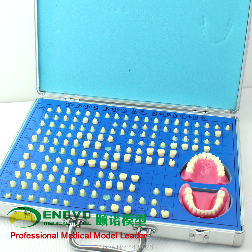 ENOVO Dental prosthesis and dental prosthesis preparation model teaching soarday dental endodontic restoration model teaching communication model pathological display dental caries